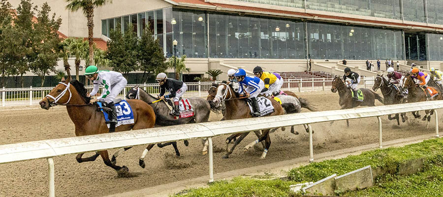 2020 Top Stakes Races for the Week Dec. 7th Edition