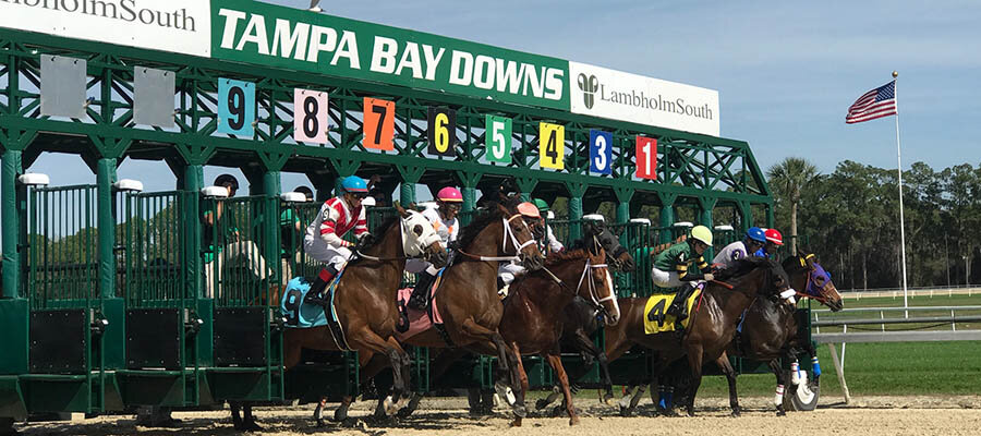 2021 Top Stakes Races for the Week Feb. 1st Edition