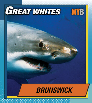 Sports betting shark review avb replacement betting websites