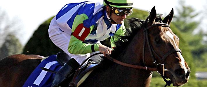 2015 Preakness Online Betting Odds on Dark Horses